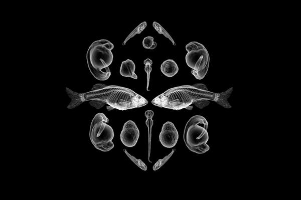 Nature morte (d'après Ernst Haeckel)